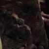 Necronomicon face