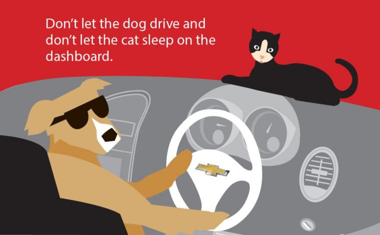 Don't Let Your Dog Drive