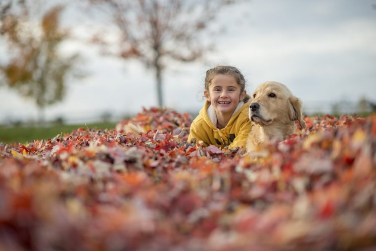 young girl and dog lying in a pile of fall leaves in a field
