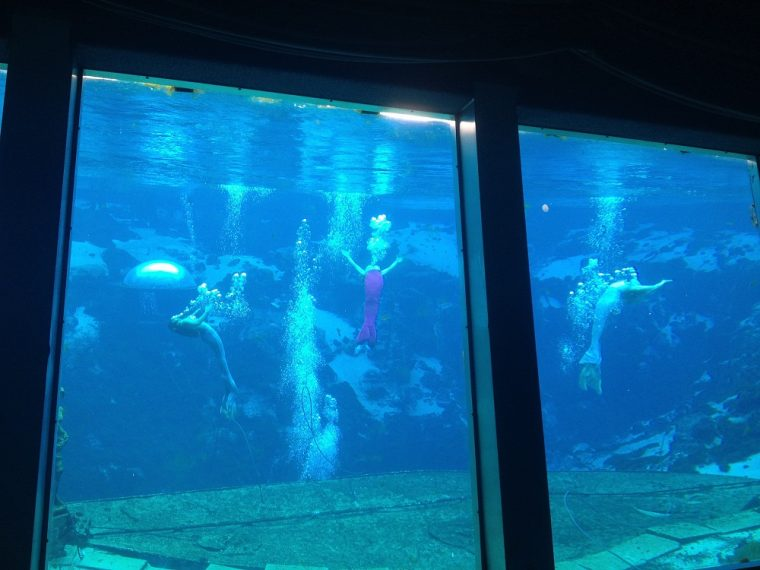 weeki wachee springs mermaids spring hill florida