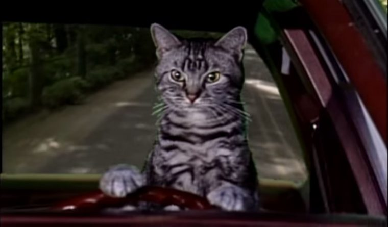 Saturday Night Live skits about cars SNL sketches driving vehicles funny celebrities toonces the driving cat