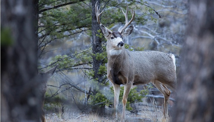 Wisconsin Deer Accident Before Midterm Elections Wildlife Traffic Safety Alert