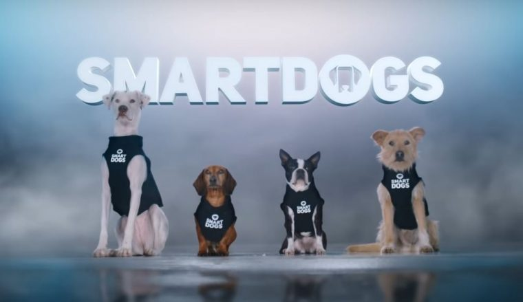 Geico Smartdogs Ad