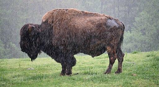 Buffalo North Carolina