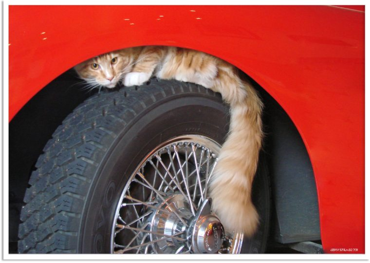 An orange cat sitting on the wheel of a car.