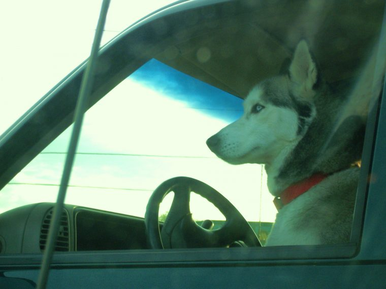 A dog with a red collar sitting behind the steering wheel