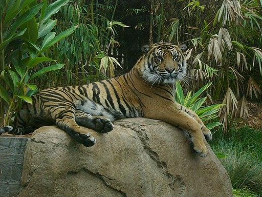 San Diego Zoo Safari Park safaris