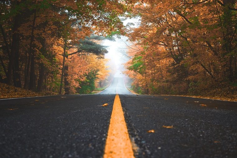 Lone Autumn Road