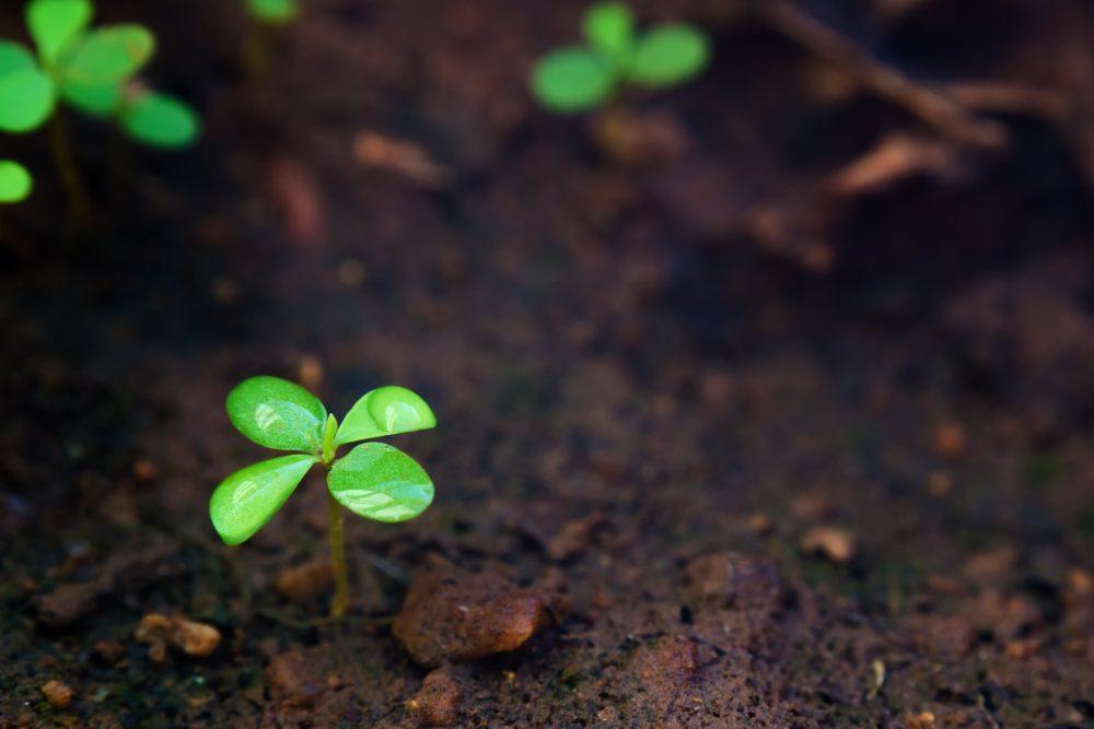 plant spout