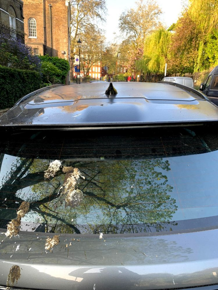 Ford synthetic bird poop test