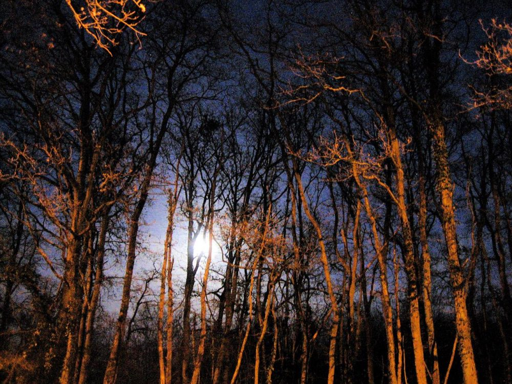 spooky woods at night | Scary New NHTSA Ad Channels Slasher Movies