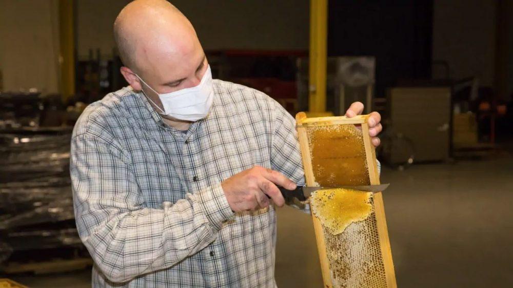 Ford National Honeybee Day Honey Harvest