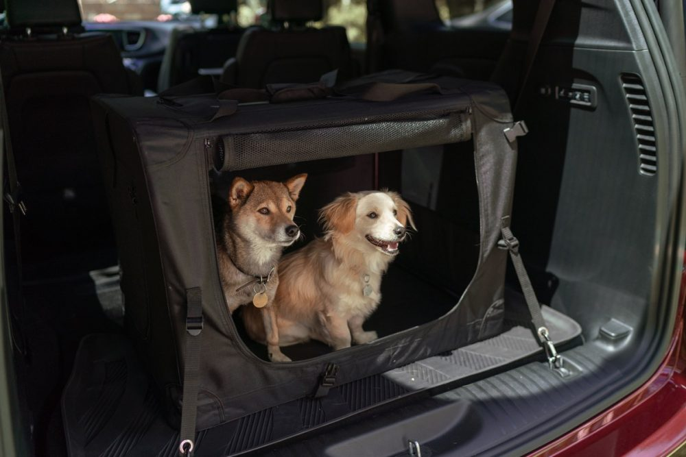 The Mopar pet kennel. Jeep Wrangler and Chrysler Pacifica make list of the 10 Best Cars for Dog Lovers.