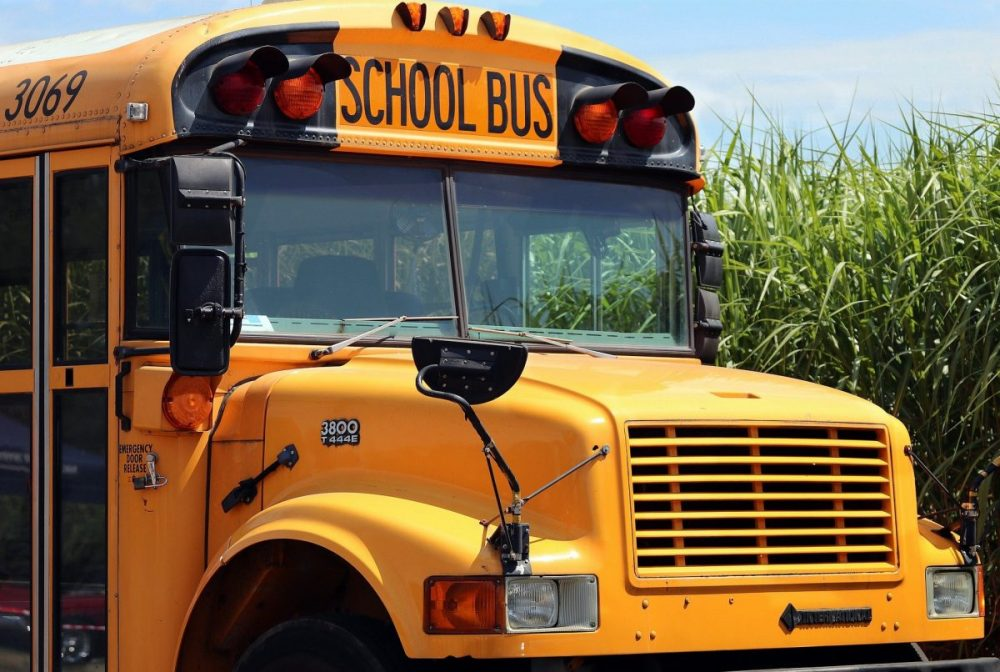 The front of a school bus is shown in front of a corn field