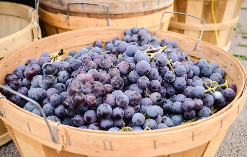 Concord grapes, which make a terrible car snack