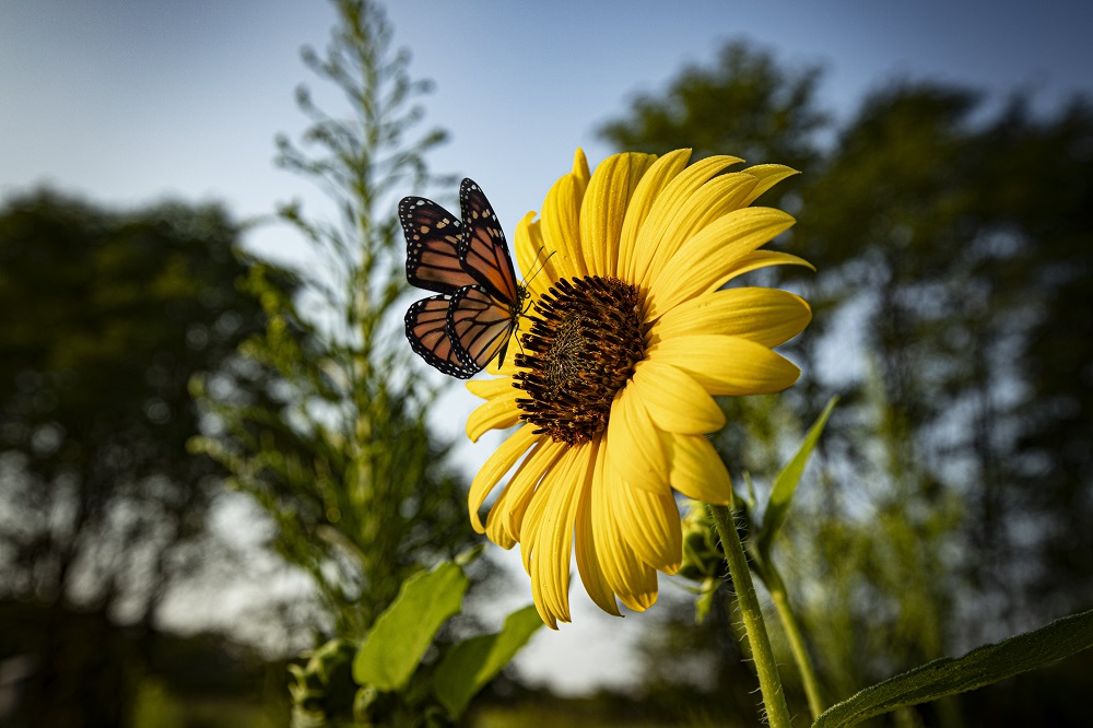 Toyota Butterfly Biodiversity in 2020 North American Environmental Report